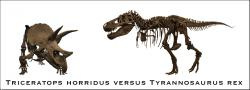 Name that dinosaur: Classic confrontation between Triceratops horridus and Tyrannosuaurs rex