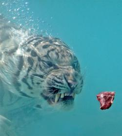 Swimming with a tiger: I think it looks like it would really be a spiritual experience.