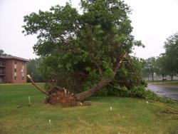 Timber: Strong winds that form out of thunderstorms can topple huge trees pretty quickly.