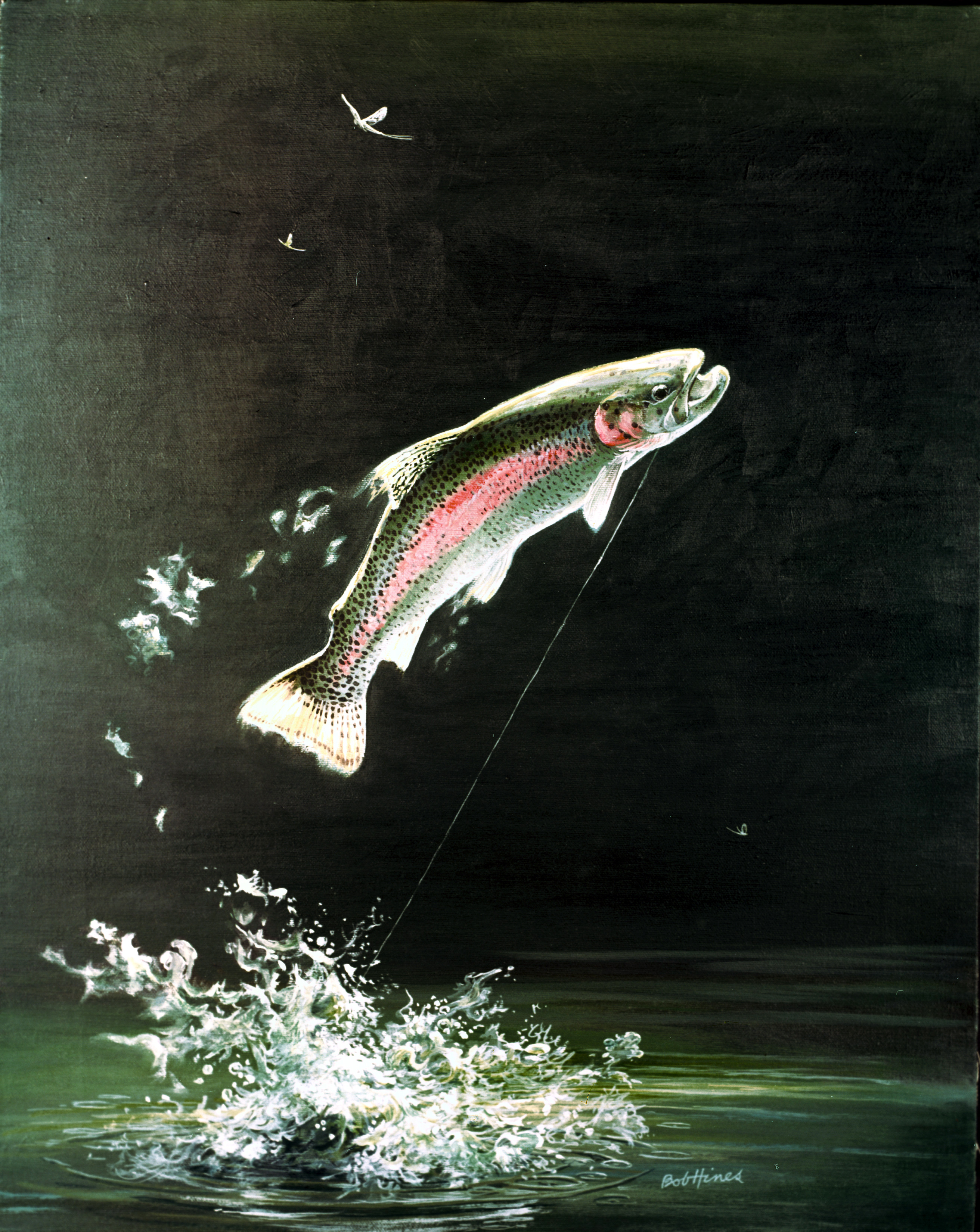 Endangered species science buzz for Rainbow trout fishing