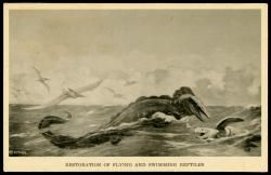 "Field Museum postcard: reproduction of paleo-artist Charles R. Knight's ""Flying and Swimming Reptiles"" mural."