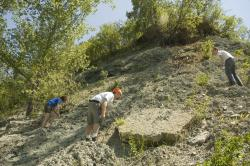 Scouring for fossils: (L to R) Ashley, John, and Chris search a hillside in Lilydale Regional Park for fossils.