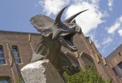 The dinosaur formerly known as Torosaurus: The recently installed Torosaurus (now Triceratops) guarding the front of Yale's Peabody Museum in New Haven, CT will probably require some text changes in its plaque.