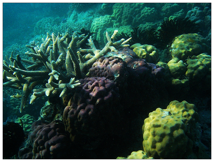 Coral reef science buzz palau reef where the party gets started sciox Image collections